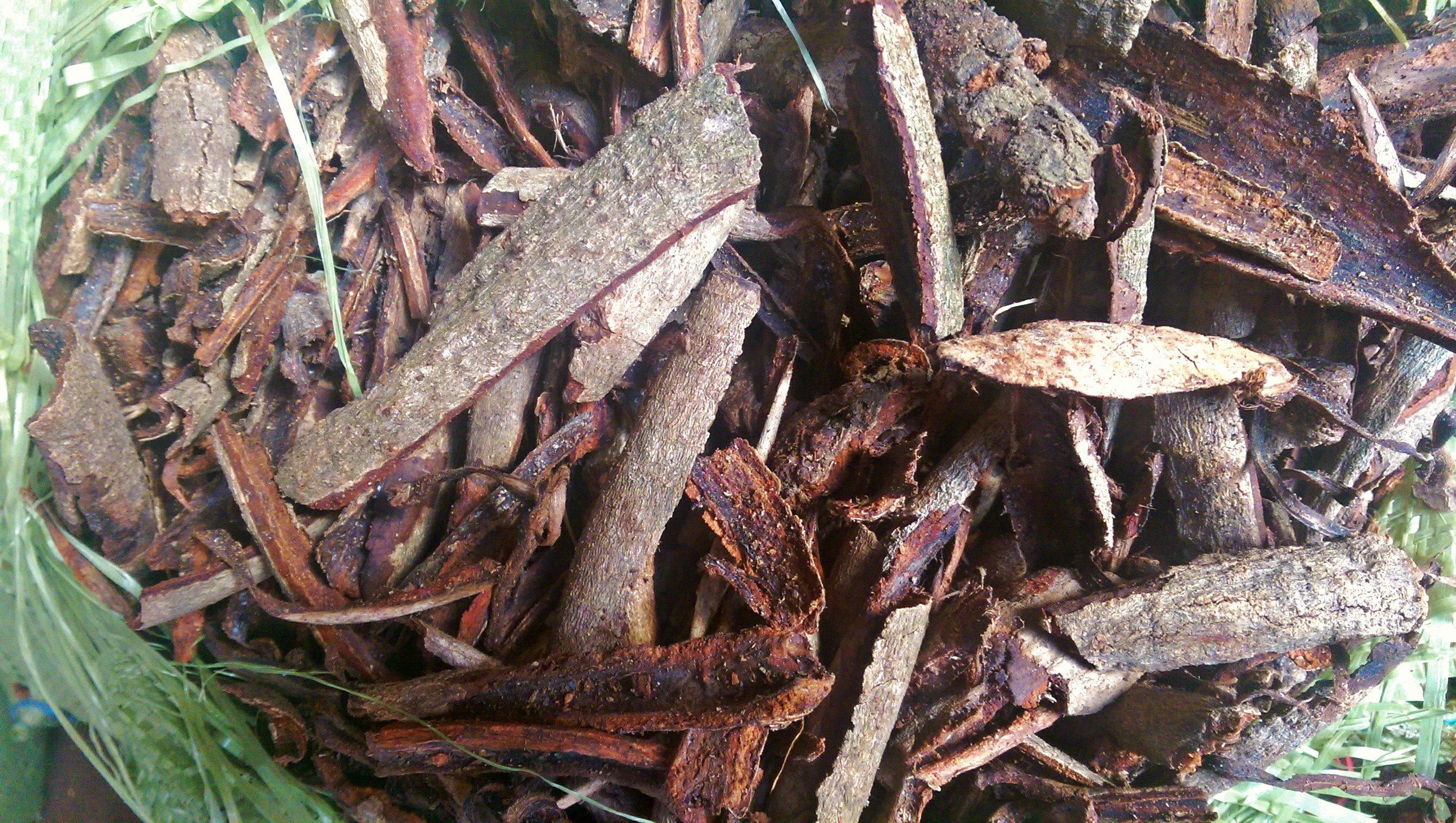 joss bark litsea glutinosa