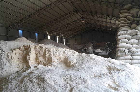White Wood powder